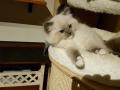 birba-2-cucciolo