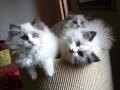 cuccioli simonlory's
