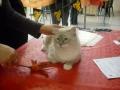 teo_allexpo_forli__ottobre_2011
